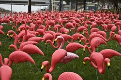 a lawn full of pink plastic flamingos